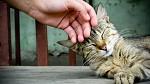 Лучший психолог - кошка