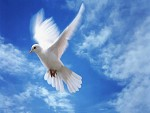 Голубь Мира - значение символа Голубь